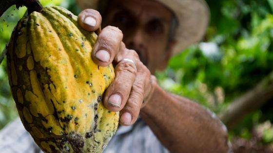 Cocoa_farmer